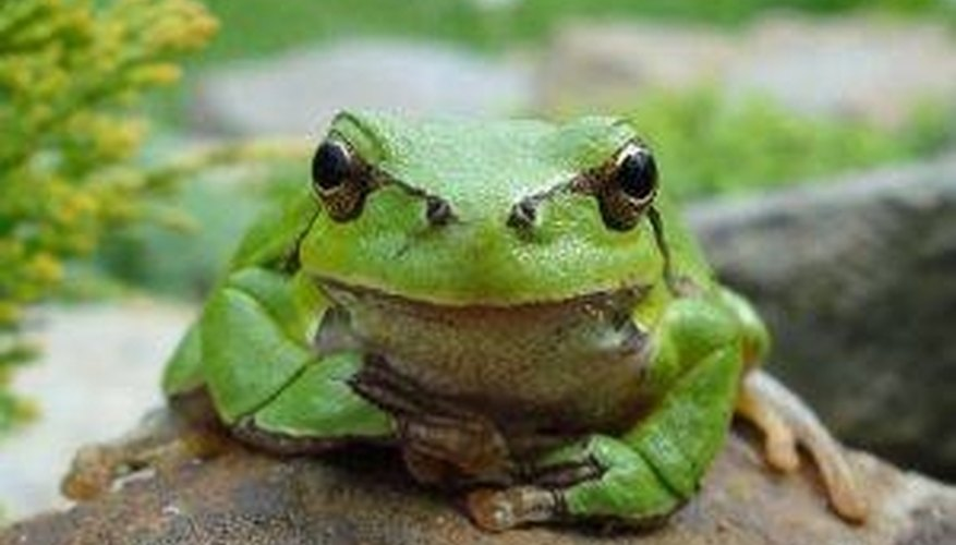 Frogs are an important part of the ecosystem.
