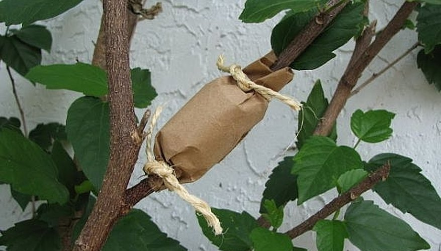 Secure With Brown Paper