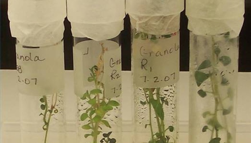 Introduction to Plant Tissue Cultures