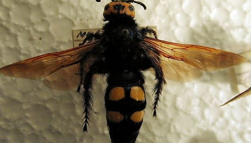 How to Neutralize Bee and Wasp Stings
