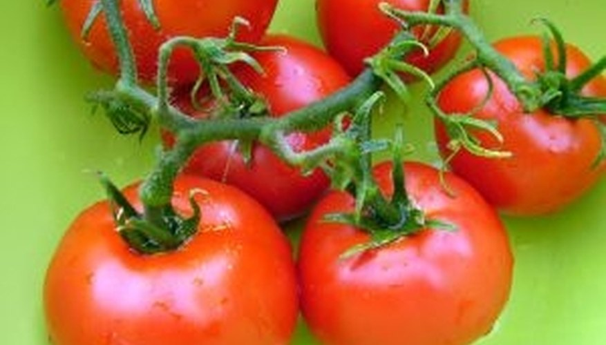 How Long Does it Take to Grow a Tomato?