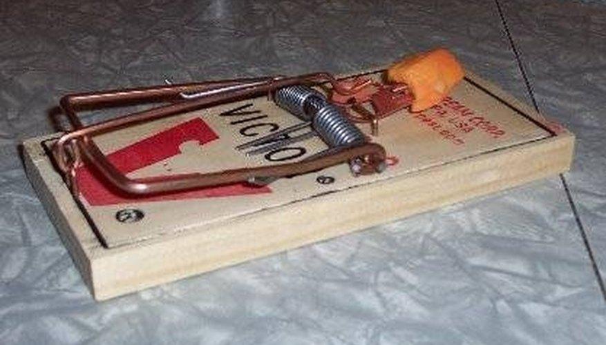 Baited rat trap