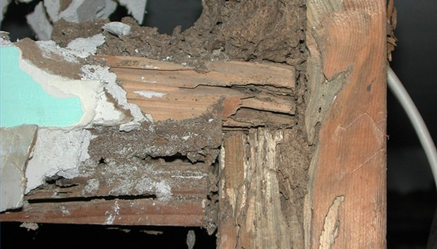 Signs of Termites in Furniture