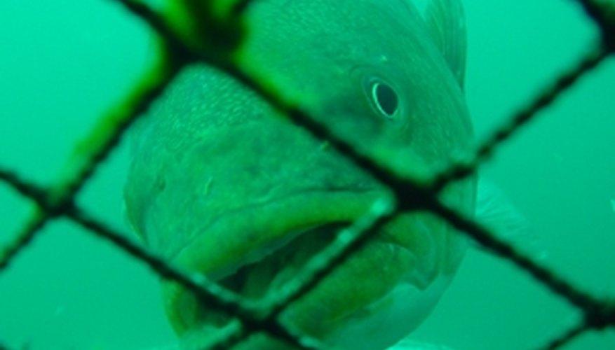 Fish Cage Farming