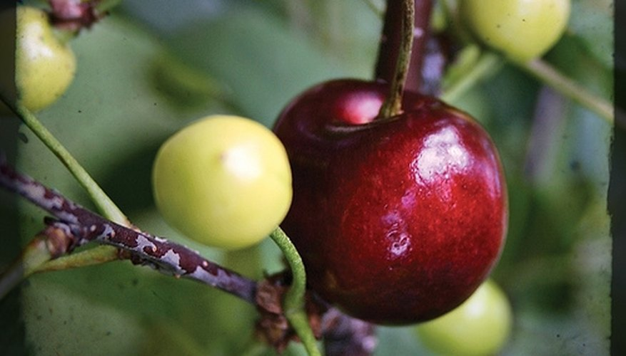 What Fruit Trees Grow The Quickest Garden Guides