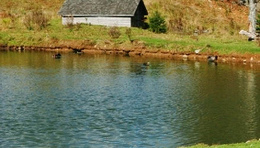 Repair Seepage in a Farm Pond