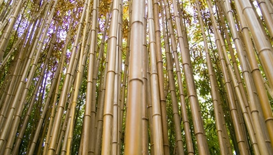 Bamboo is a sustainable and sturdy material.