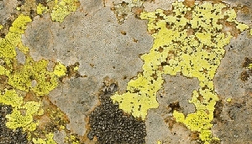 Mold and mildew spores can be brought into your home from outside