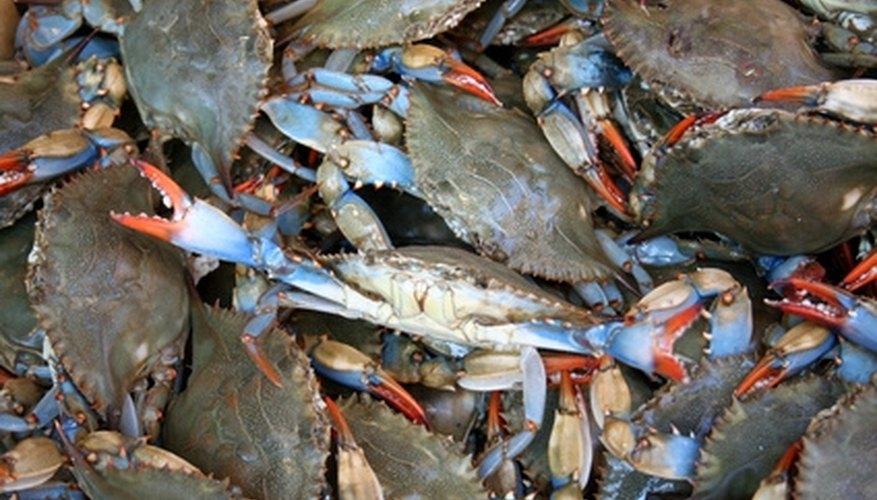 Florida Fishing & Crabbing License
