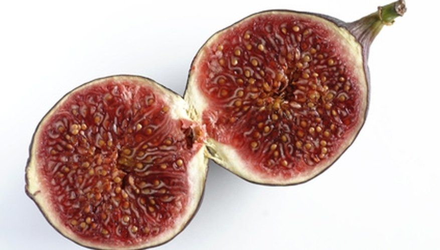 The mission fig tree produces dark purple or black fruit.
