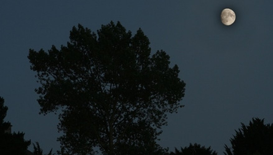 Make your own moonlight with a tree-mounted flood light.