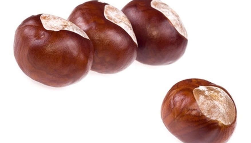 Early settlers believed the buckeye nut brought good luck.