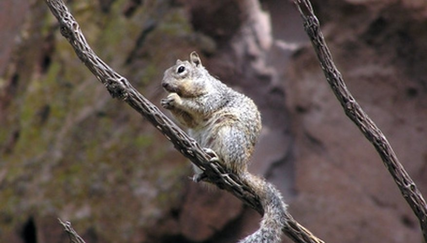 While cute, squirrels can also be a hazard around your home.