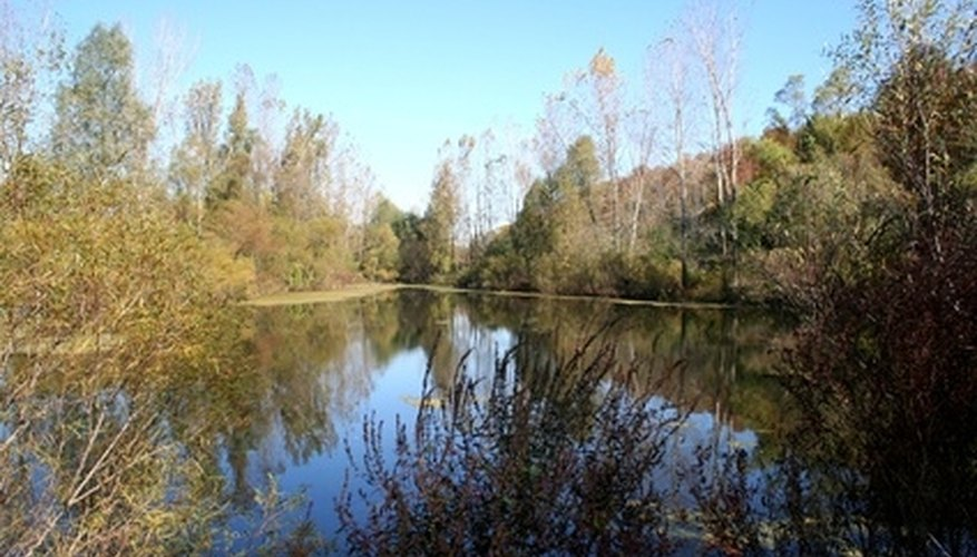 A big pond offers scenery and a connection to nature.