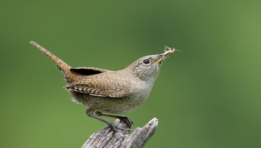 Create a birdhouse the wrens in your yard will love.