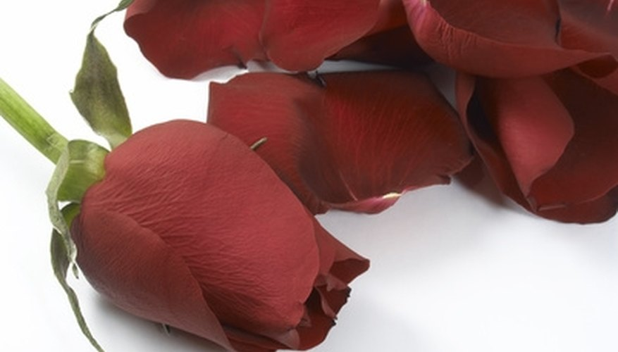 Preserved rose petals can be used in soaps, paper crafts and Wiccan spells.