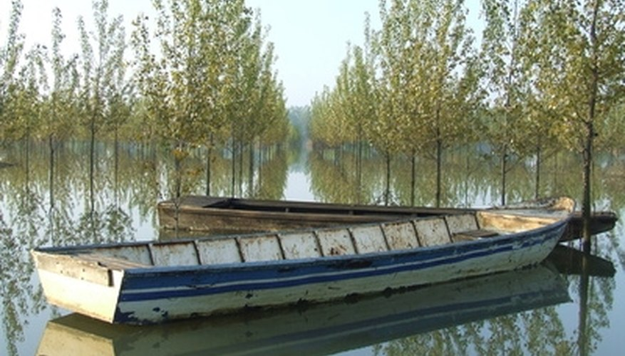 Near water is the natural setting for poplars.