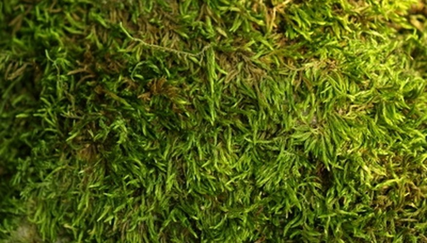 Copper sulfate solution can help you remove moss.
