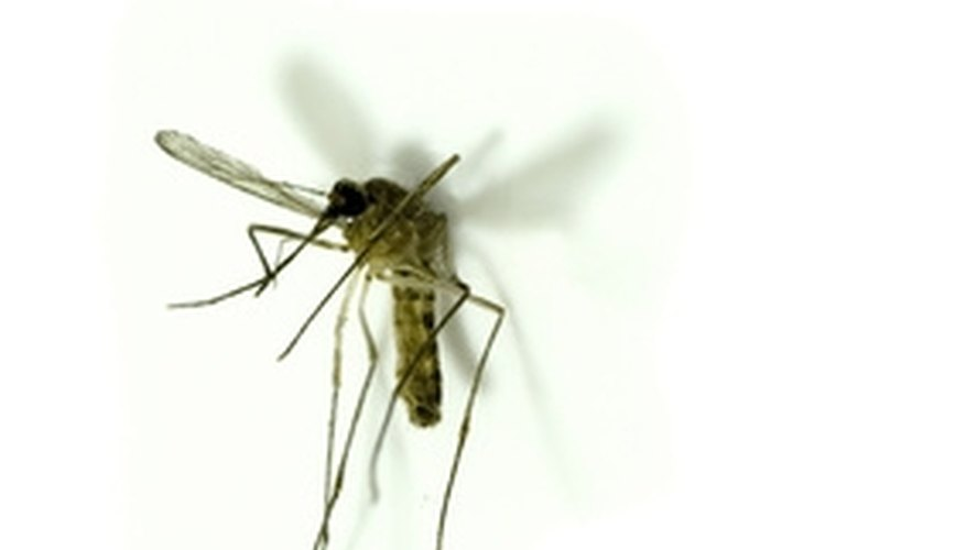 Mosquitos can ruin your outdoor events.