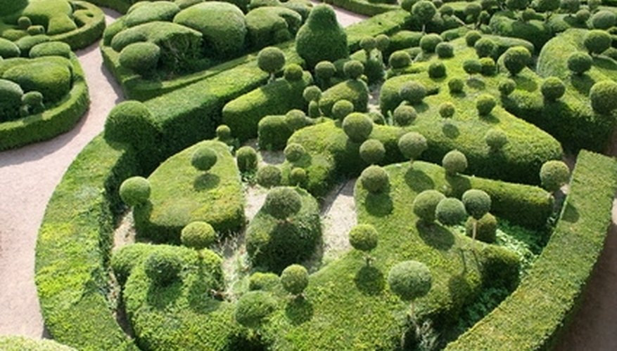 Buxus shrubs are pruned into various shapes.
