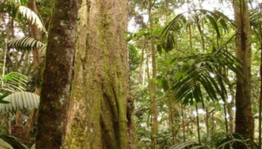Many different plants grow in tropical rainforests.