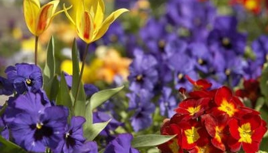 Blooming color is vital consideration in any flower bed design.