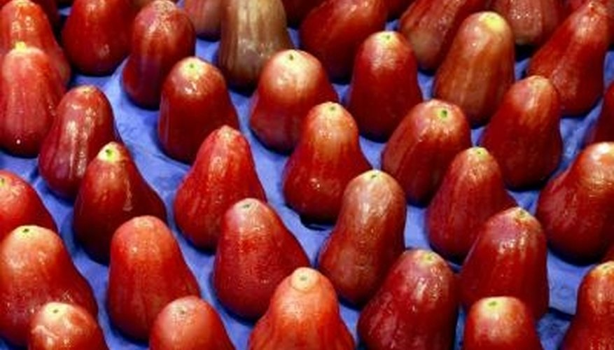 The fruit of the jambu tree are known as watery rose apples.