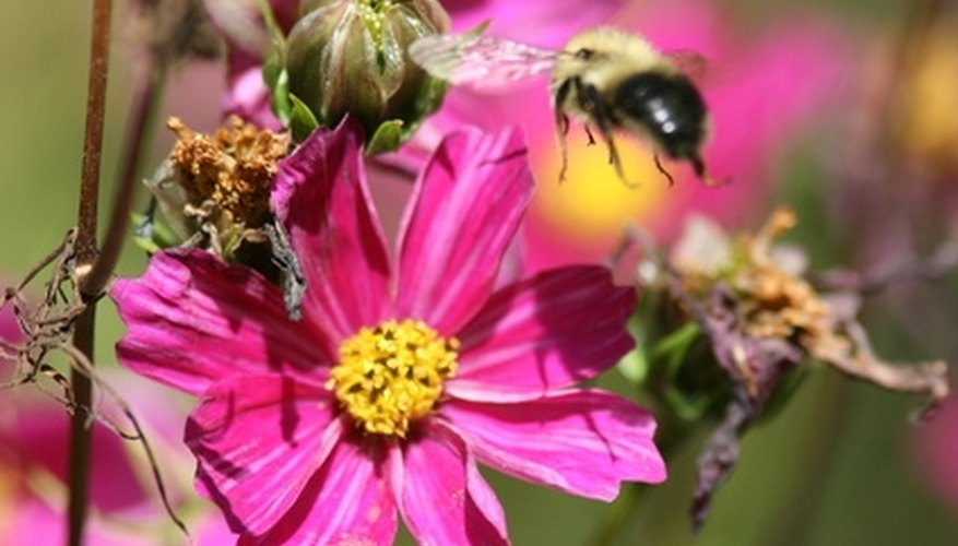 The interaction between bees and plants are vital in the success of an ecosystem.