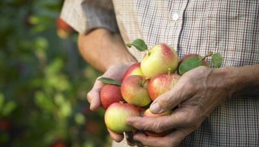 Fruit trees add form and function to your backyard landscaping.