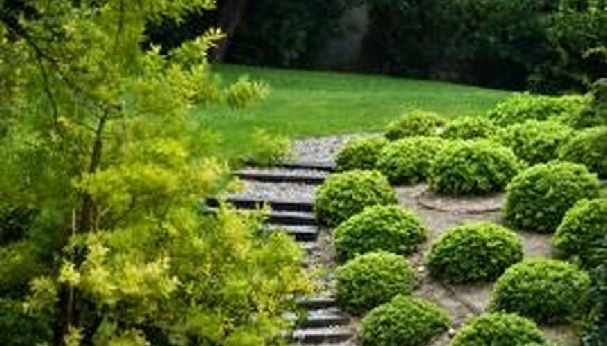 Small shrubs and walkways appear as circles and random shapes on a landscaping plan.