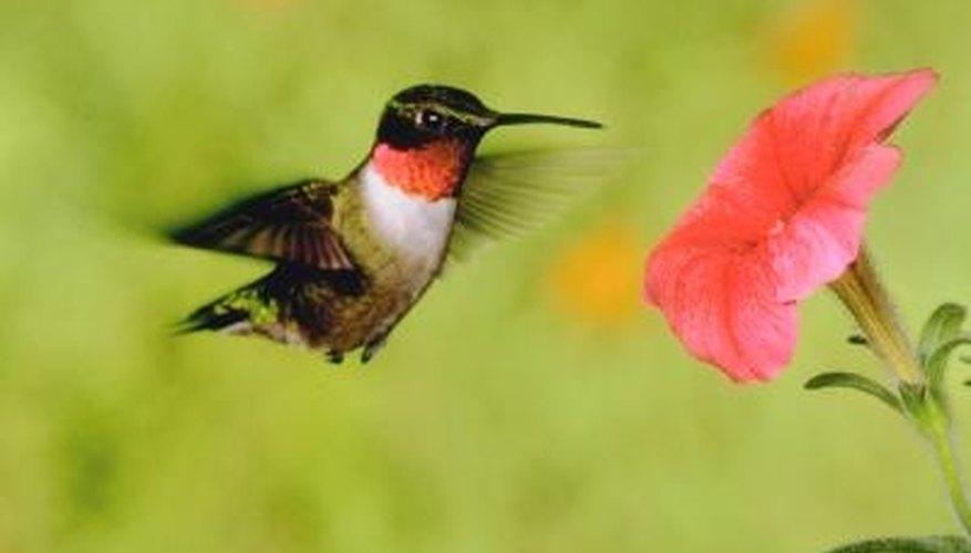 The 2-liter pop bottle hummingbird feeder mimics a natural plant the bird normally feeds from.