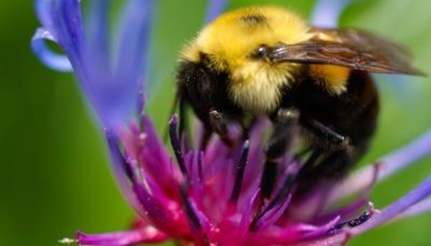 Bees see a different range of colors than humans.