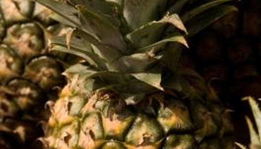 The pineapple is a type of bromeliad, perhaps the most well-known.