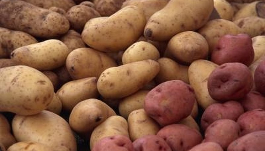 Russet potatoes are among some of the largest varieties of potatoes, as they require a long growing period.
