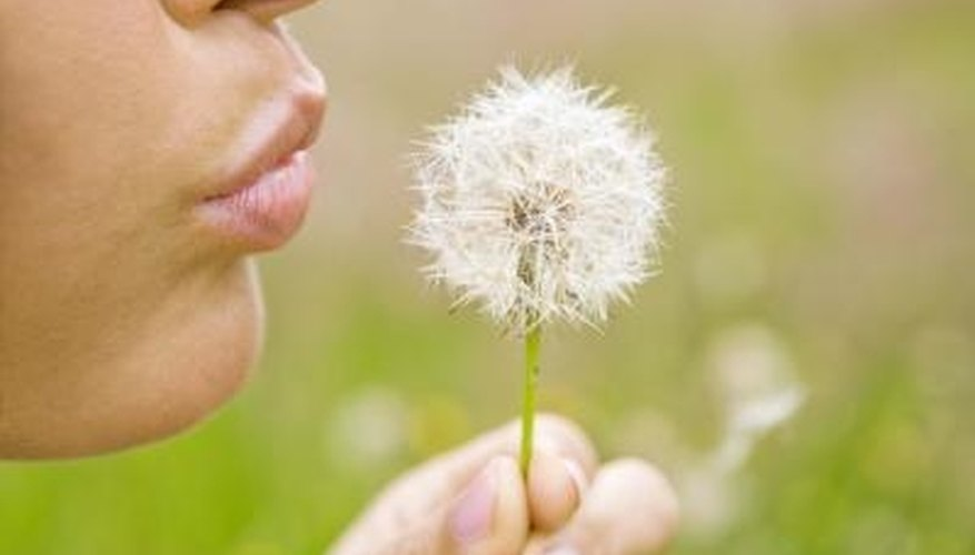 Dandelions trigger allergies for some people.