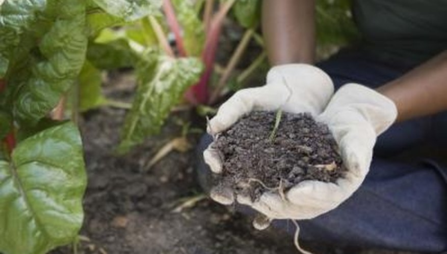 Amend your soil to enhance its drainage.