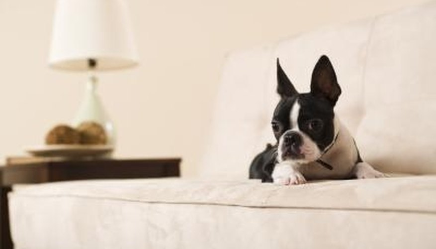 There are several ways to protect your sofa from pet accidents.