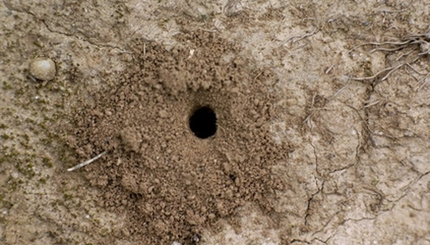Ant mounds are the ant colonies' nesting sites.