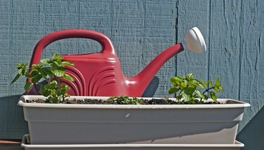 Water your plants one-half hour before applying chemicals to fight pests.