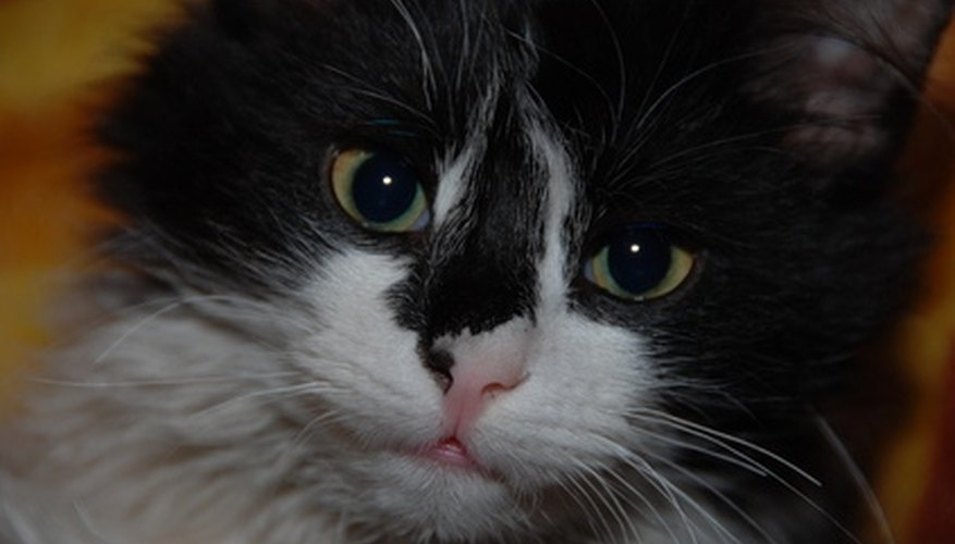 Untreated urine stains encourage cats to pee again on the affected area.