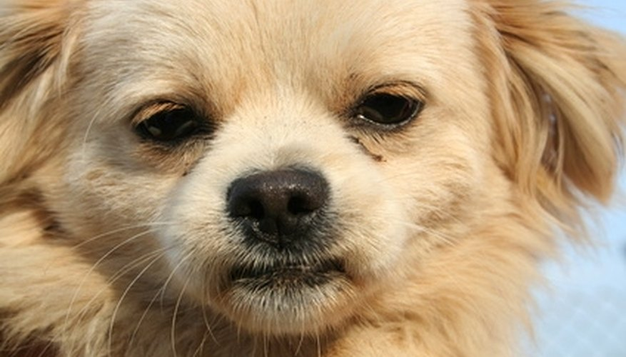 Even small dogs can leave major urine stains.
