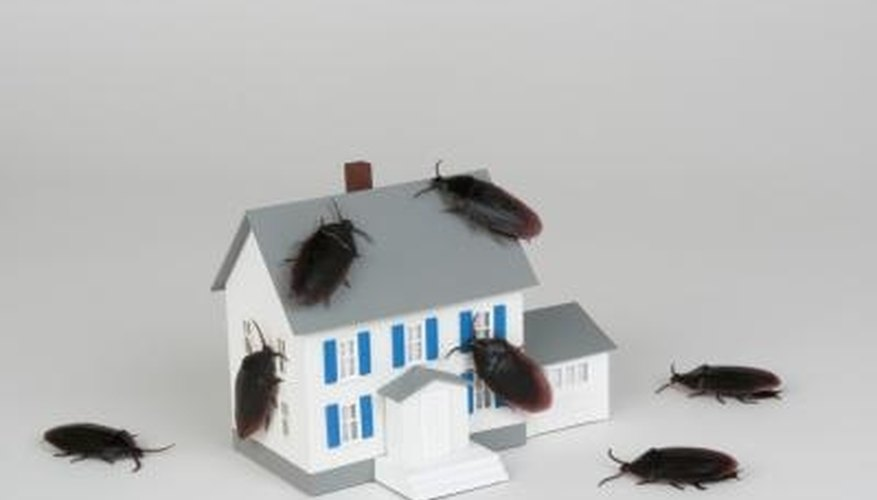 Roaches can damage household items and contaminate your food.