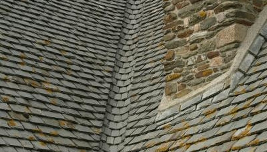 Algae Is Sometimes Confused With Moss, Which Is More Harmful To Roofs.