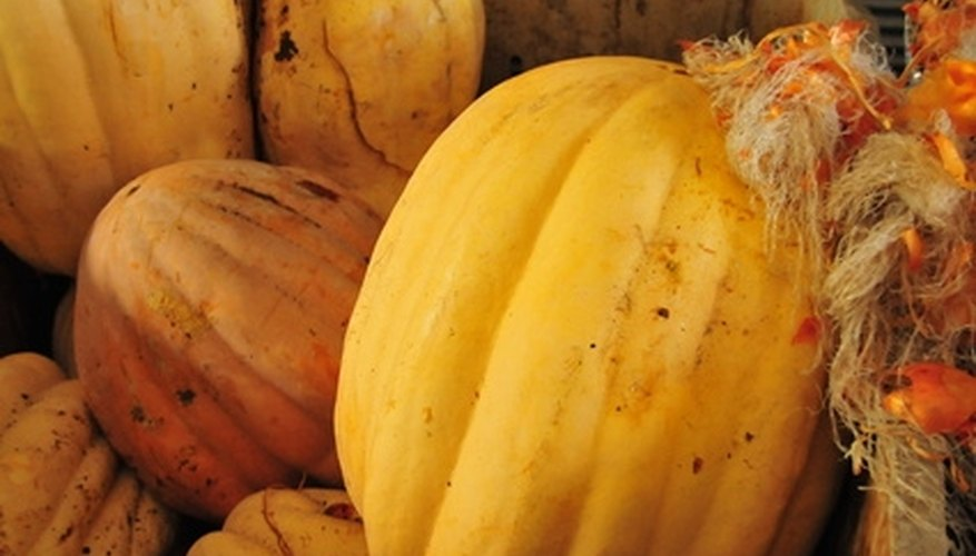 Spaghetti squash changes from creamy white to bright yellow at maturity.