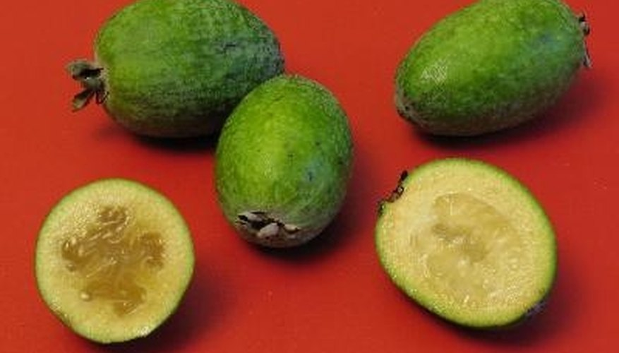 Feijoas are among the most cold-hardy tropical fruits.