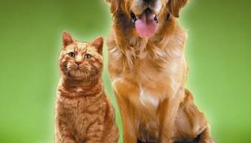 Fleas are enemies of cats and dogs.