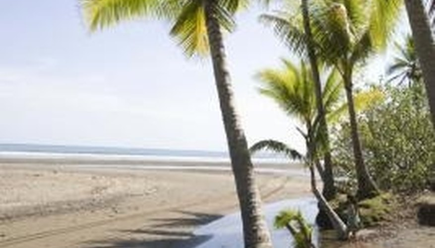 Palm trees are a symbol of paradise and sunny beaches.