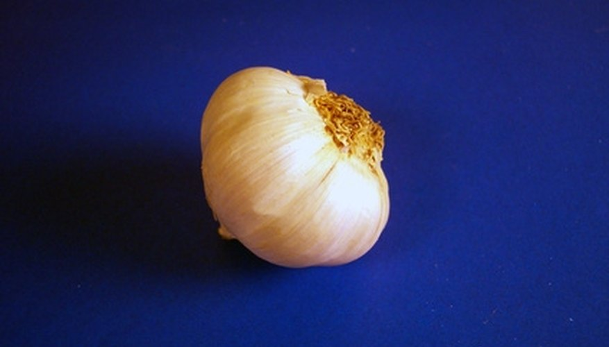 A clove of garlic's essence can kill and repel various small insects on plants.