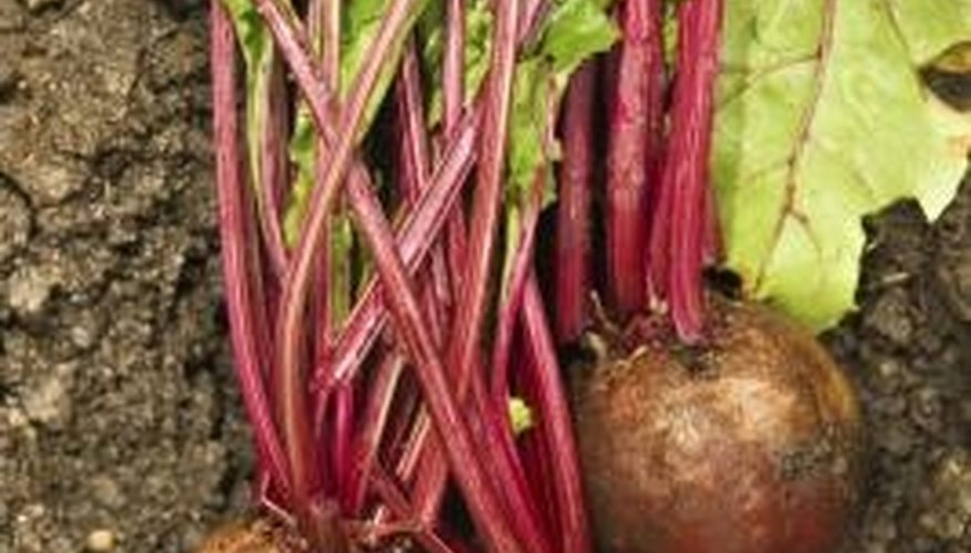 Turnip roots and greens are both edible.