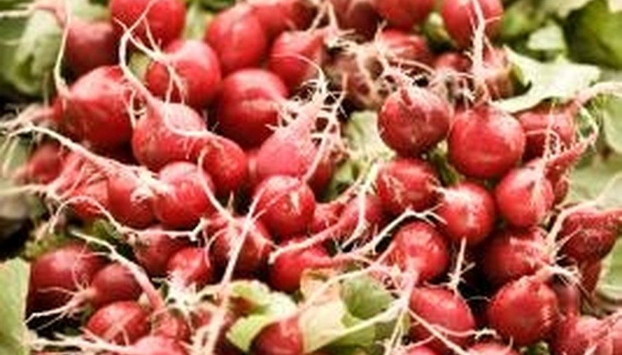 Beautiful fresh radishes provide near-instant gardening gratification.